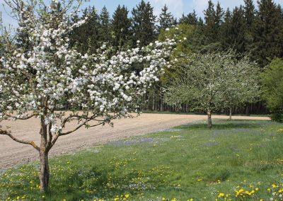 Herrlicher Frühling